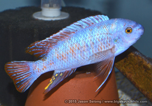 RAS Workshop Auction: Sun, Feb 15 - Carolina Fish Talk